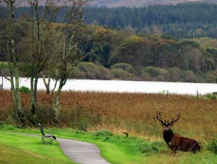 Ireland's Native red deer