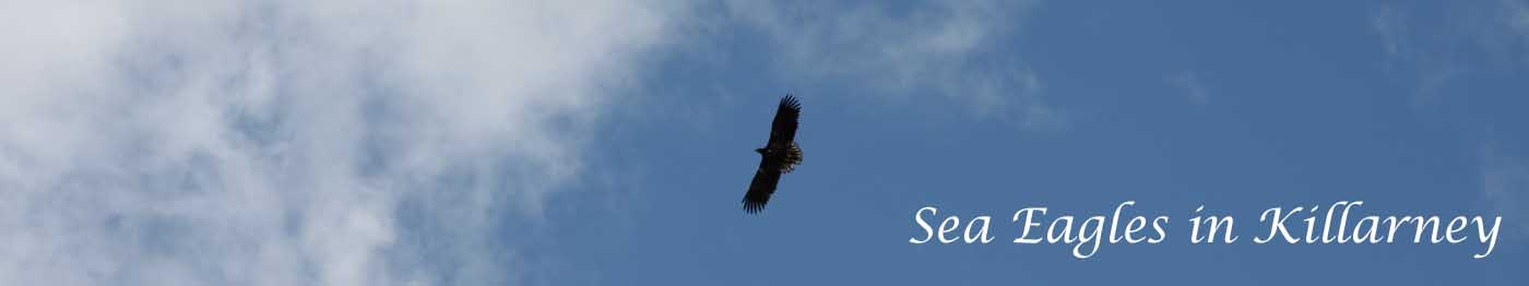 Sea Eagles in Killarney Lake Hotel