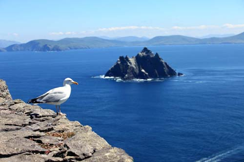 Seagulls on Skelligs