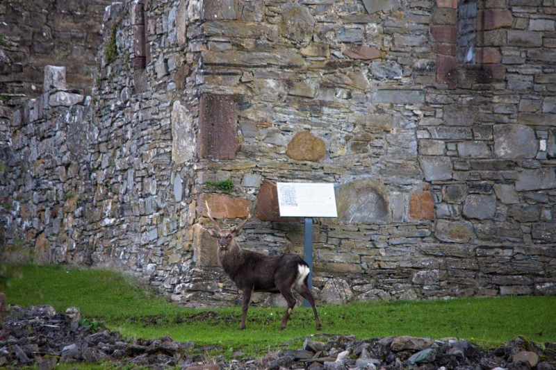 Innisfallen Abbey Killarney