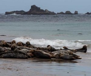 seals_blasket_islands