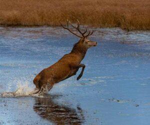 red-deer-killarney