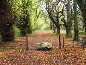 Friars Walk Killarney