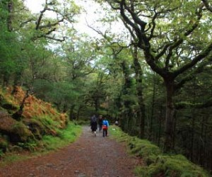What to do in Killarney if it rains